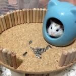 DIY Hamster Platform