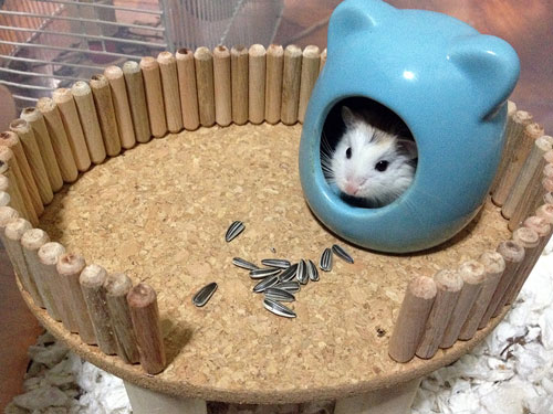...and we have a DIY platform for your hamster!