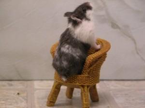 Mottled Campbell's dwarf hamster