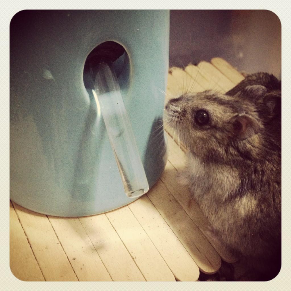 Diy hamster hideout
