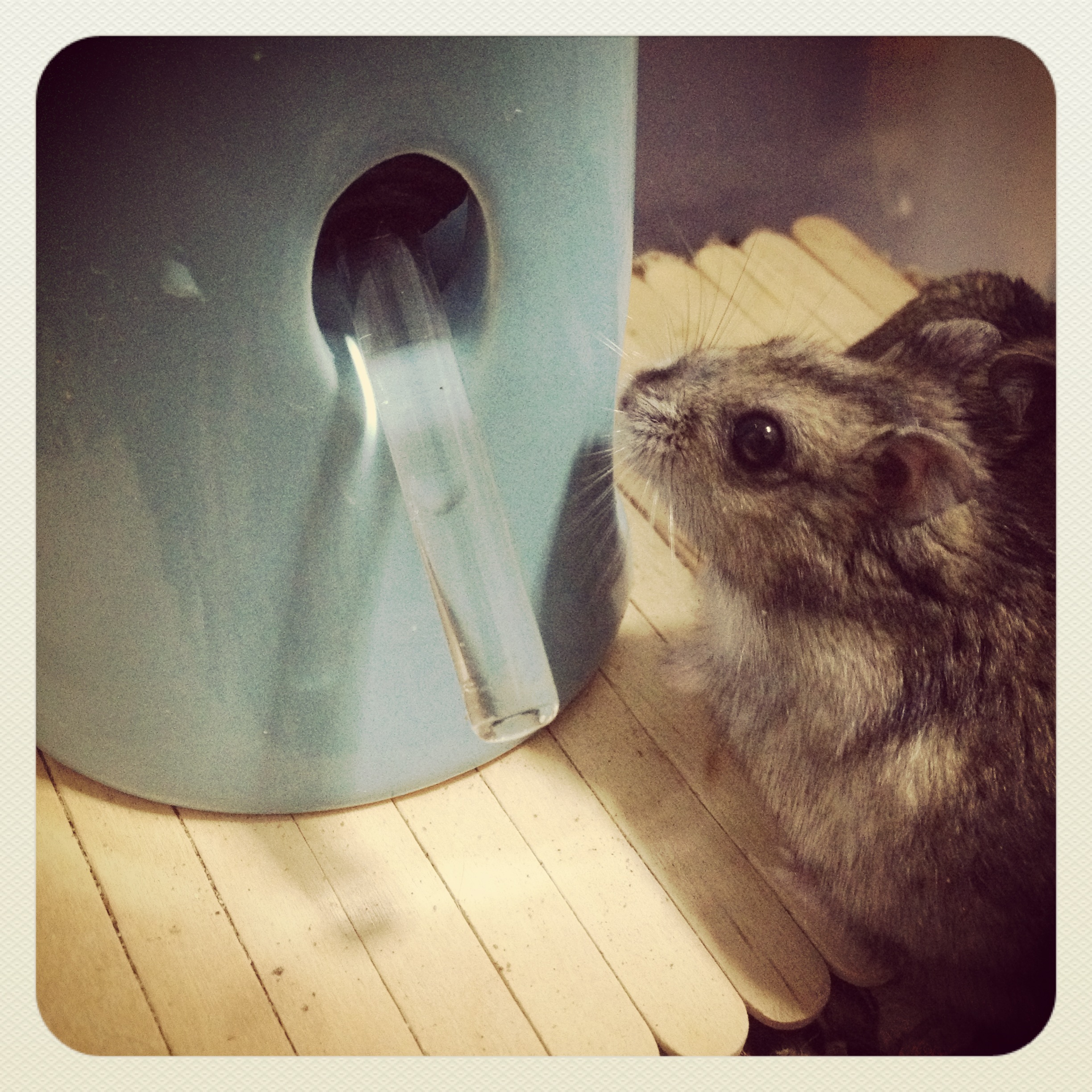 Chew-proof Dwarf Hamster Bottle Stand and Hideout