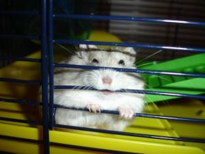 hamster chews bars