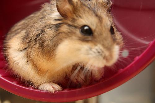 Noisy Hamster