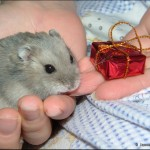 Best Hamster-Themed Gifts