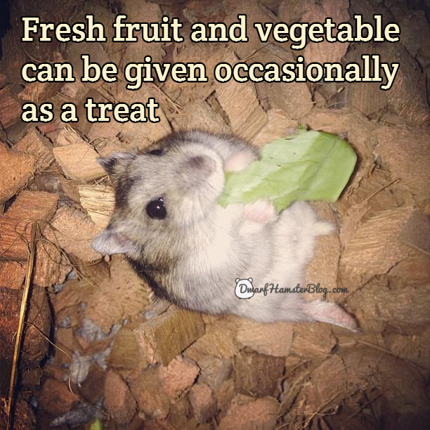 Fresh fruit and vegetable can be given occasionally as a treat