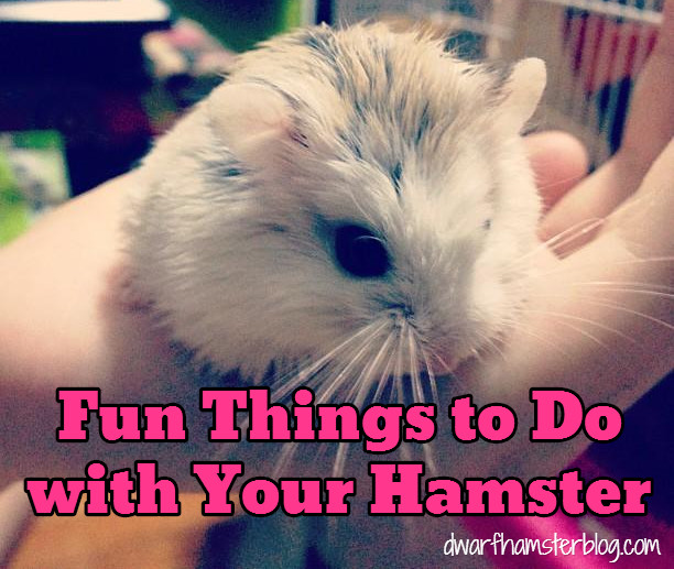 fun things to do with your hamster