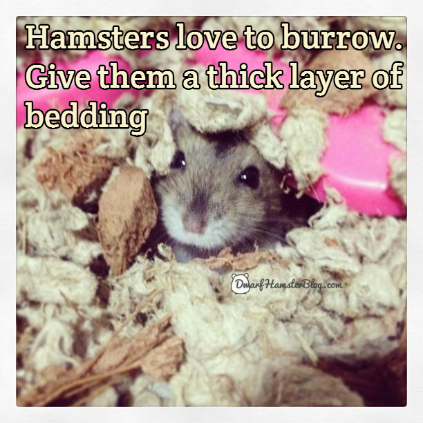 Hamsters love to burrow. Give them a thick layer of bedding
