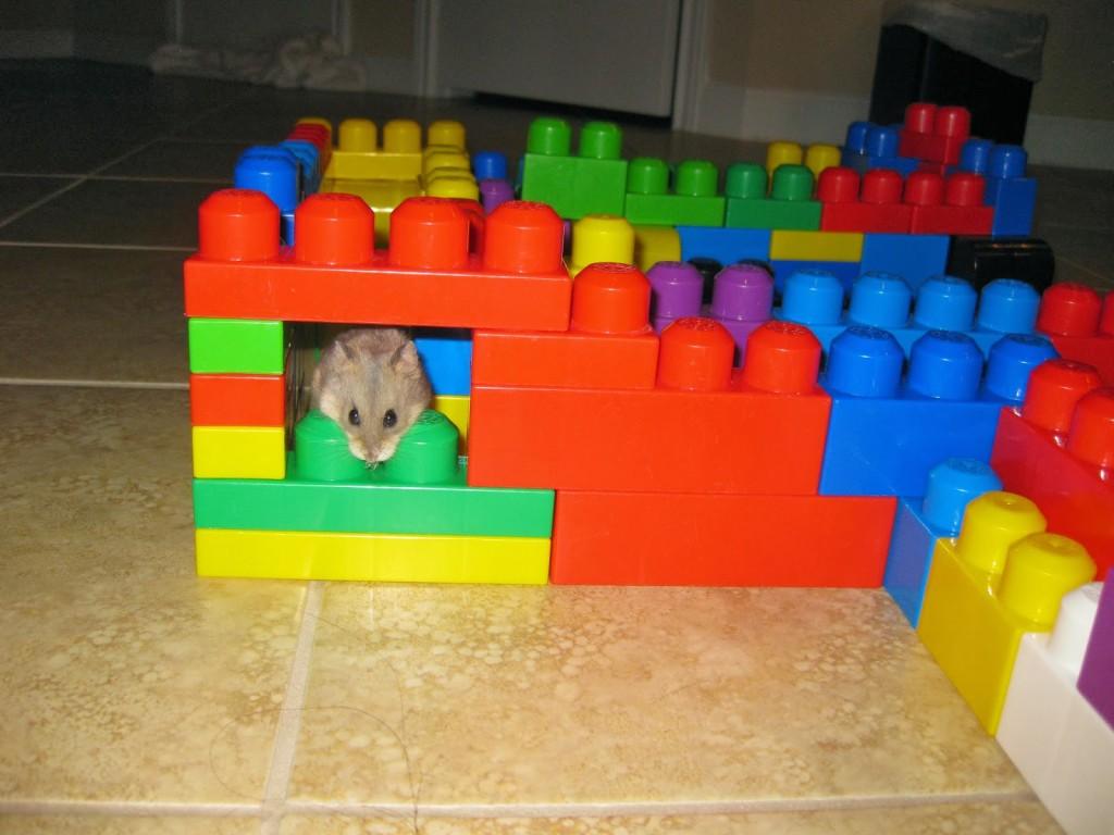 lego hamster maze