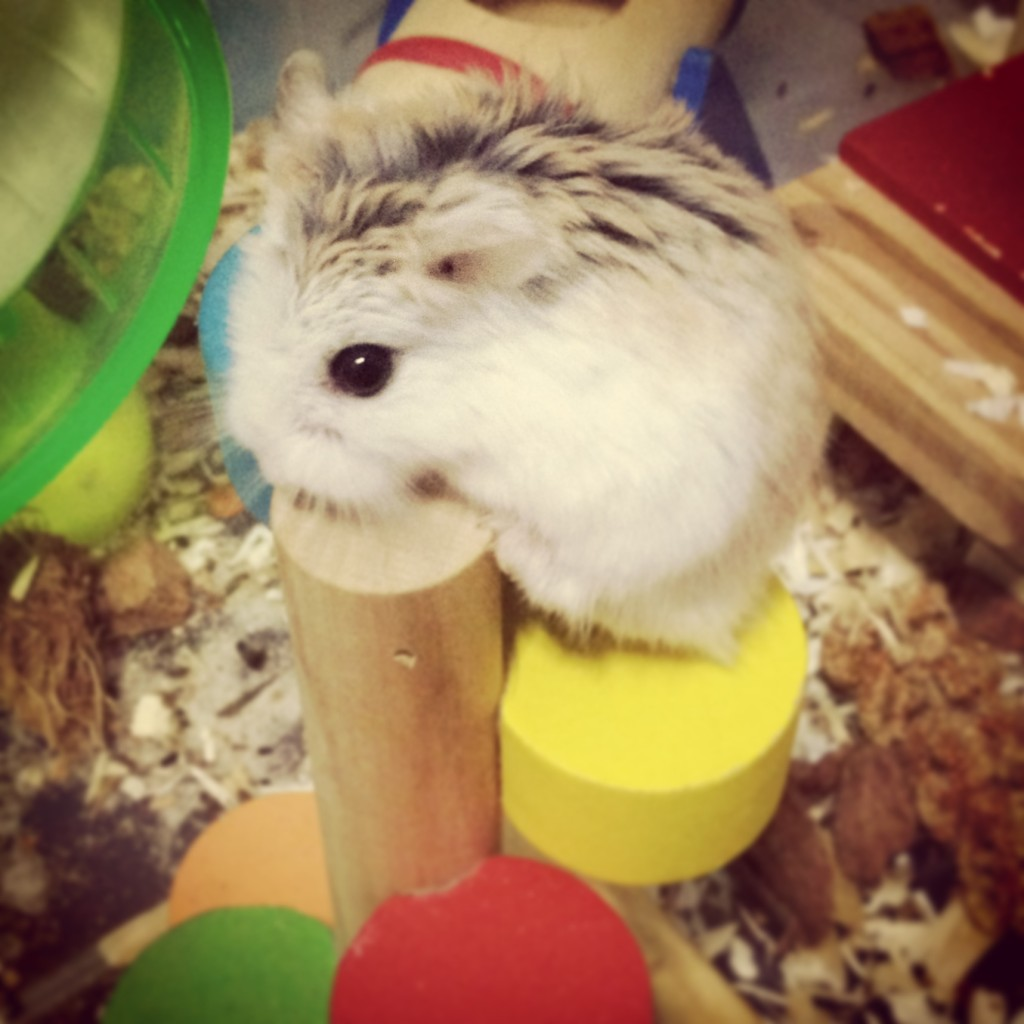 Train your hamster to do stuff