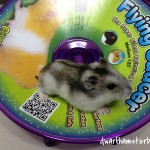 Ware Flying Saucer Hamster Wheel Review