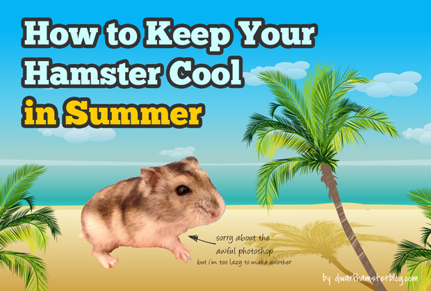 how-to-keep-your-hamster-cool-in-summer