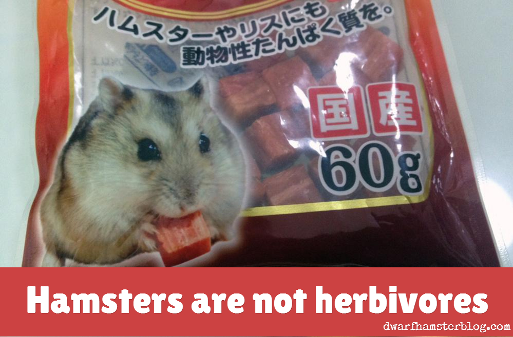 hamsters herbivores omnivores