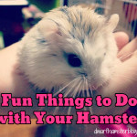 10 Fun Things to Do with Your Hamster